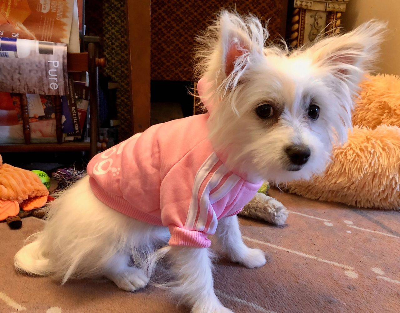 How to choose the right clothes for your dog?